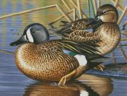 Blue Winged Teal Ducks (Kit - Chart, Fabric & Threads)