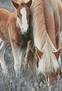 Pony And Foal (Kit - Chart, Fabric & Threads)