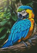 Macaw Profile (Kit - Chart, Fabric & Threads)