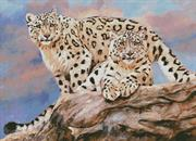 Snow Leopards On A Rock (Kit - Chart, Fabric & Threads)